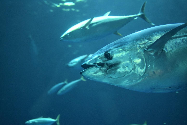 Ligne à thon pour pêche à la palangre, tresse hélicoïdale technique